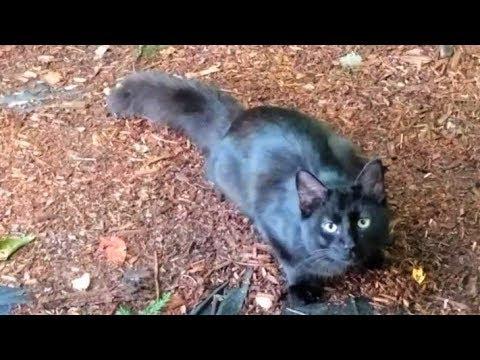 Stray Cat Encounter - A Documentary