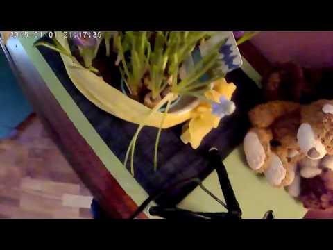 Первоцвет (мускари, армянский мускари, розовый гиацинт, крокусы).