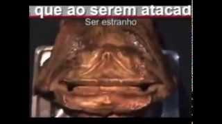 UNKNOWN ANIMAL FOUND IN AMAZON, EXTRATERRESTRE, ALIENIGENA, CABLOCO D