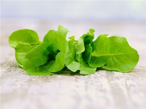 Hydroponic Lettuce - One Big ButterCrunch