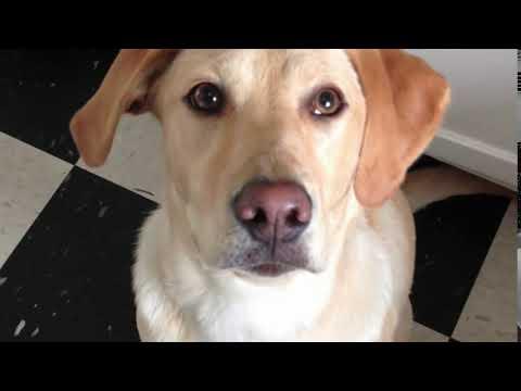 0 Cachorro fica vesgo ao comando do dono