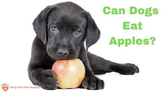 Can Dogs Eat Apples? Can Puppies Eat Apples? Are Apple Seeds Ok Too?