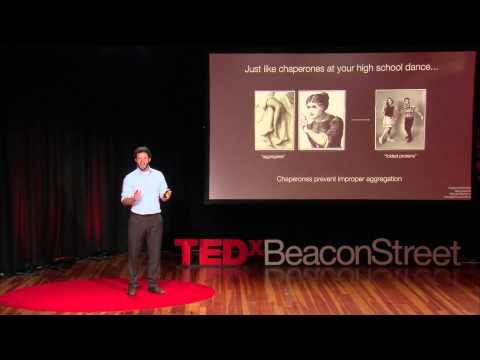 Cancer, Alzheimer's & Protein Origami | David Pincus | TEDxBeaconStreet