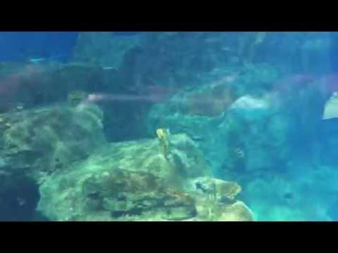 Istanbul Aquarium Forum