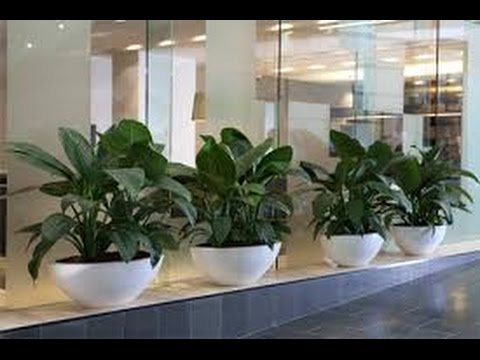 artificial indoor plants - artificial indoor plants pictures - YouTube
