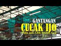 Gantangan Cucak Ijo Piala Joki Cilik Tristan Cup G T Enterprise Pondok Cabe By Hobi Id  Mp3 - Mp4 Download