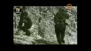 Волчьи ворота. Тайны чеченской войны.