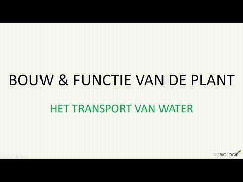 Bouw en functie van de plant - het transport van water
