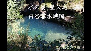 水の島・屋久島 白谷雲水峡編