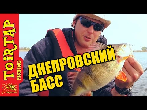 рыб фото окунь