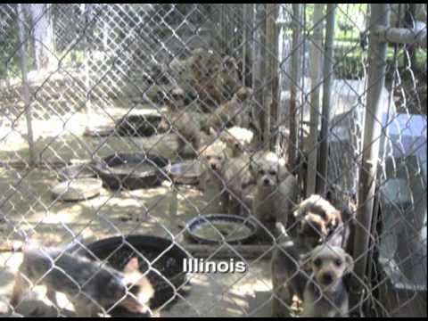 CAPS vs. Bauck: How A Small Nonprofit Brought Down A Large Puppy Mill