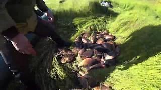 Ловим карася и охотимся на уток в Якутии! duck hunting Yakutia