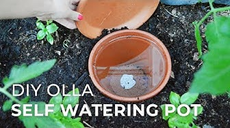 How to make DIY Ollas: Self-Watering Systems for Plants