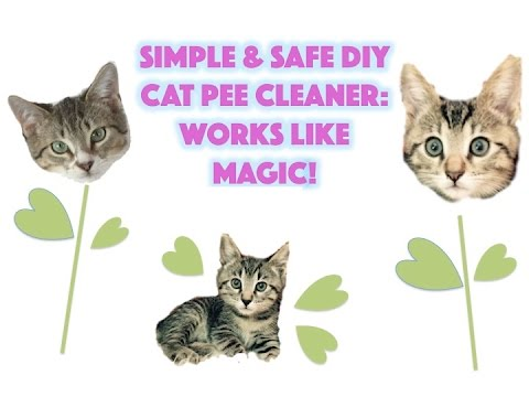 How to clean cat urine -Easy, safe & natural DIY cat PEE remover - It really works!
