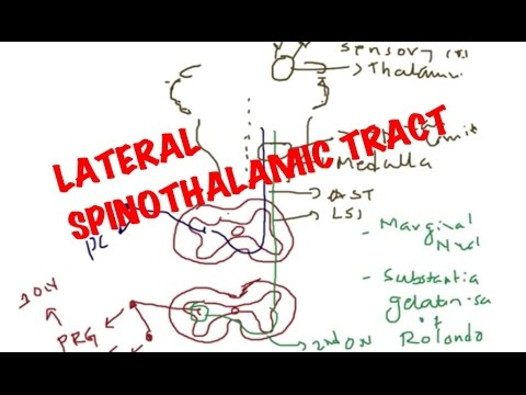 Medical Video Lecture, PHYSIOLOGY Lateral Spinothalamic Tract - YouTube