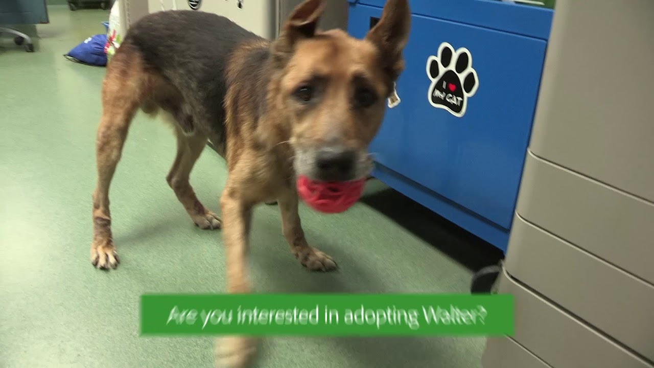 Prince William County Animal Shelter Pet of the Week November 26, 2018
