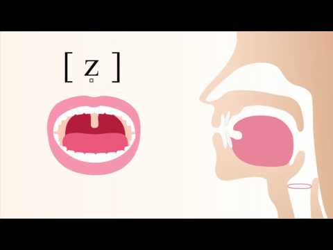 [ z̻ ] voiced laminal alveolar sibilant fricative