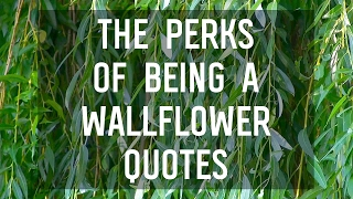 Breathtaking Quotes From The Perks Of Being A Wallflower By Stephen Chbosky