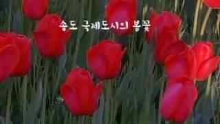 앵크 :송도 국제도시의 봄꽃