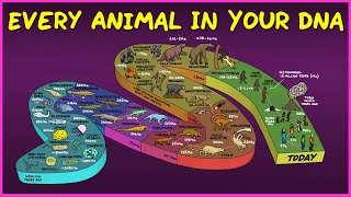 Every Animal In Your DNA