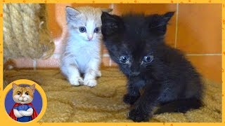 Спасенные котятки играют и веселятся