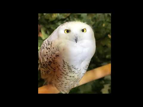 Jour 1 Kyoto - visite bengal et owl Forest