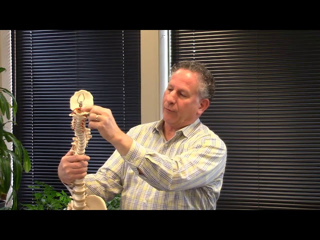 Can Exercise Take the Place of Chiropractic Visits