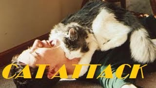 Cat attack on Dubai Resident | Travel & Adventure Vlog | Vikith M