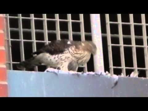 Cooper's Hawk in Downtown Scranton