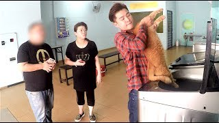 Cat owner puts pet in washing machine  What would you do? MAXMANTV