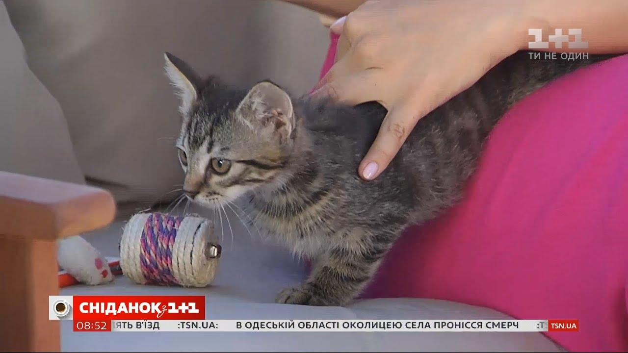 Тримісячне кошеня Тоша шукає турботливу родину