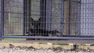 Freedog (hd) K9 Documentary