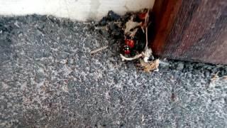 Zoo sex ladybird (животный секс,божья коровка)