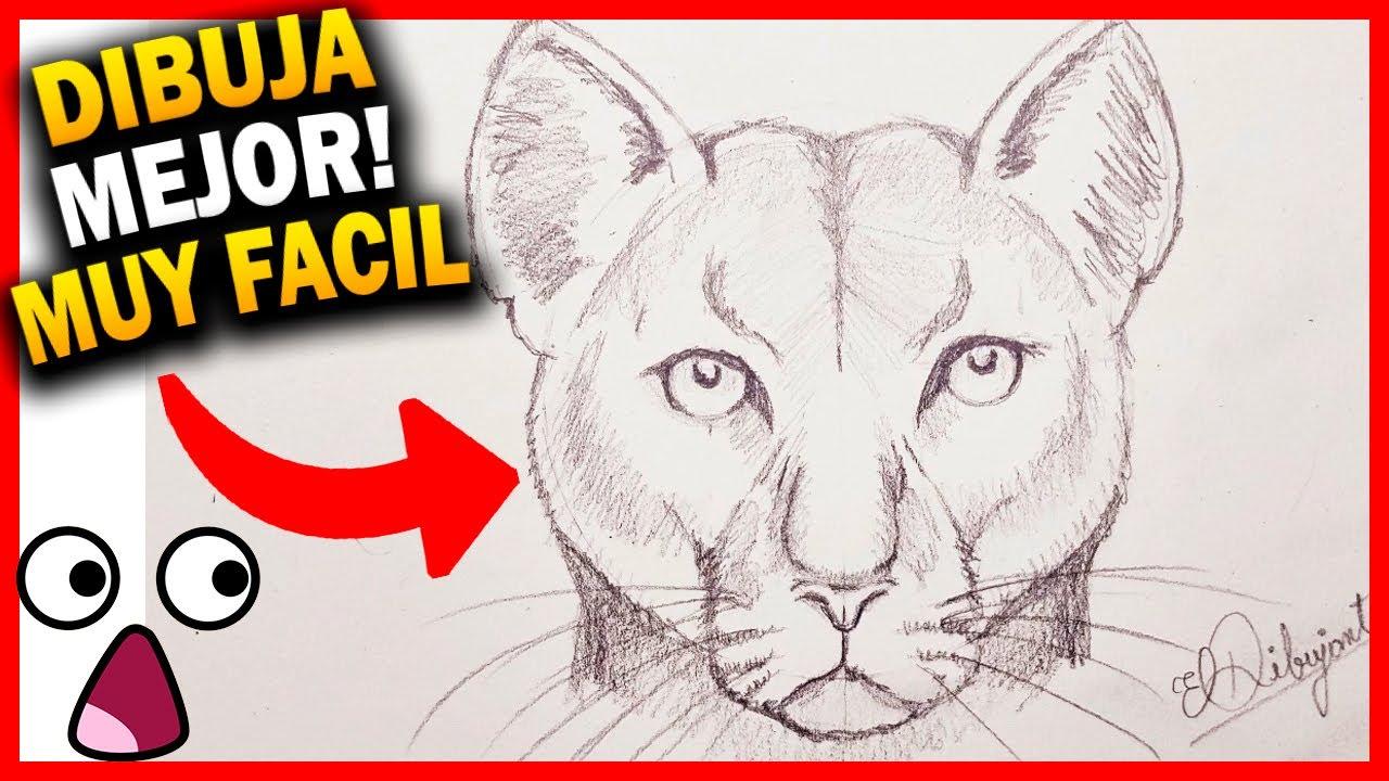 pestaña Encogerse de hombros Inspector  🔥 COMO 🅳🅸🅱🆄🅹🅰🆁 UN PUMA paso a paso FÁCIL REALISTA a lápiz ▷☑️ Curso  de Dibujo Cougar Speed Drawing - YouTube