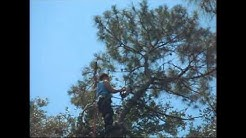 Jacksonville FL tree trimming