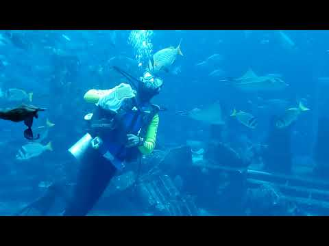 Dubai  – Atlantis The Lost Chambers Aquarium