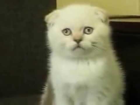 Игра Говорящий кот Том Свидание Talking Tom Cat Love