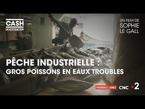 Cash investigation - Pêche industrielle : gros poissons en eaux troubles (intégrale)