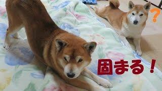 アメブロ→http://ameblo.jp/aemhamc2/entry-12120996769.html 朝起きた...