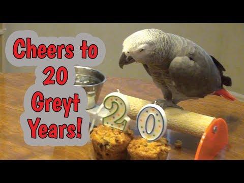 🎈Einstein's 20th Hatchday (Birthday) Celebration 🎈