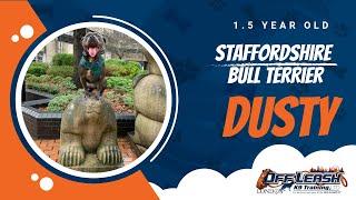 Staffordshire Bull Terrier Dog Training in London | Dusty | Dog Training