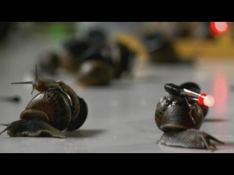 Incredible time-lapse photography of snails: New study reveals snail