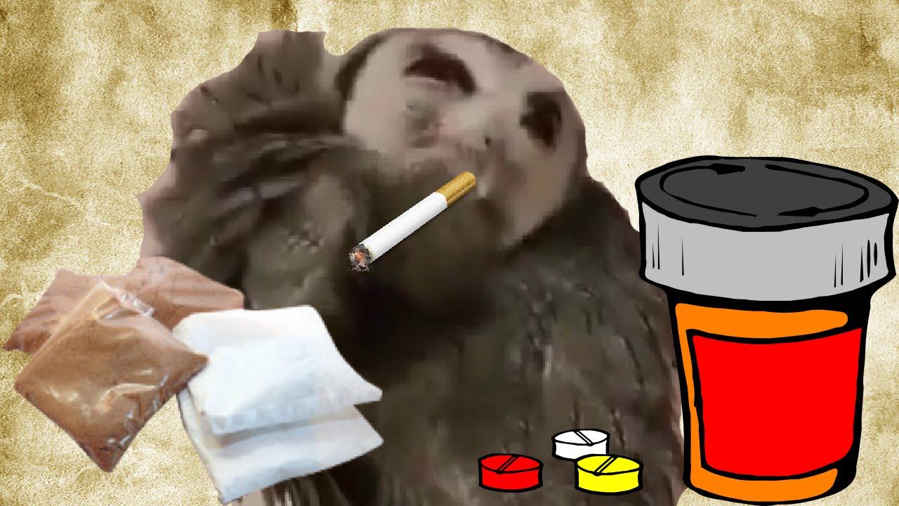 Half Hour Drugs Owl - YouTube