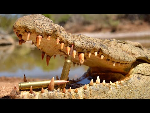 Crocodile Hunting with RW Safaris and African Sun Production