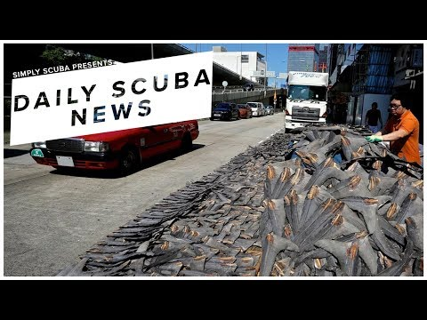 Daily Scuba News - China's Demand For Shark Fins Is Increasing