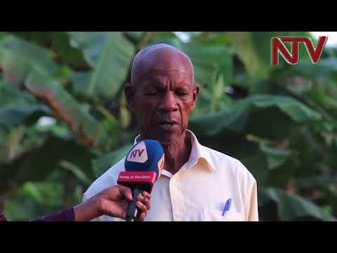 Ugandan farmers advised to adopt Water harvesting as drought spells persist