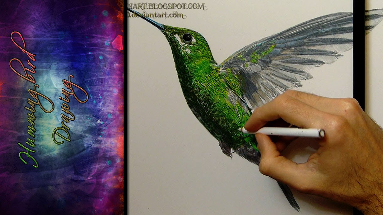 Hummingbird Drawing Realistic - YouTube