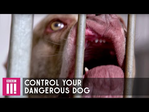 How To Control Your Dangerous Dog