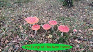 The Fungi of The New Forest - a compilation with music