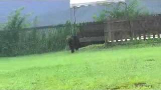 ニューファンドランド犬7ヵ月のRIKUは初めてのことばかり。 興味深々の...